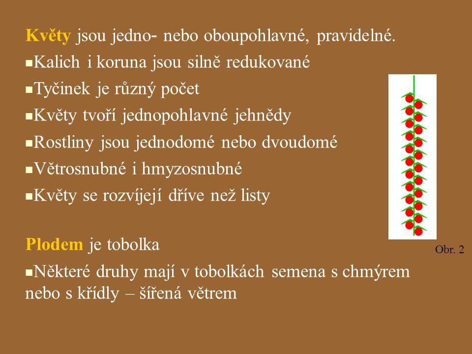 Rod: Vrba (Salix) Vzpřímené jehnědy Vzpřímené jehnědy Opylování hmyzem Opylování hmyzem Vázány na stanoviště dobře zásobená vodou – břehy tekoucích i stojatých vod a vlhké lesy Vázány na stanoviště dobře zásobená vodou – břehy tekoucích i stojatých vod a vlhké lesy Zástupci: Zástupci: -vrba bílá -vrba bílá -vrba křehká -vrba křehká -vrba jíva -vrba jíva - vrba košíkářská - vrba košíkářská
