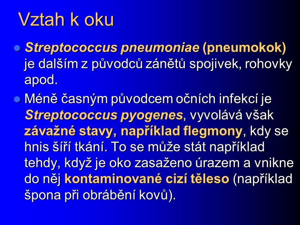 Vztah k oku Streptococcus pneumoniae (pneumokok) je dalším z původců zánětů spojivek, rohovky apod.