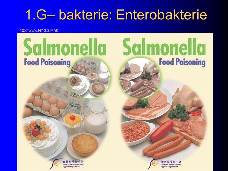1.G– bakterie: Enterobakterie http://www.fehd.gov.hk