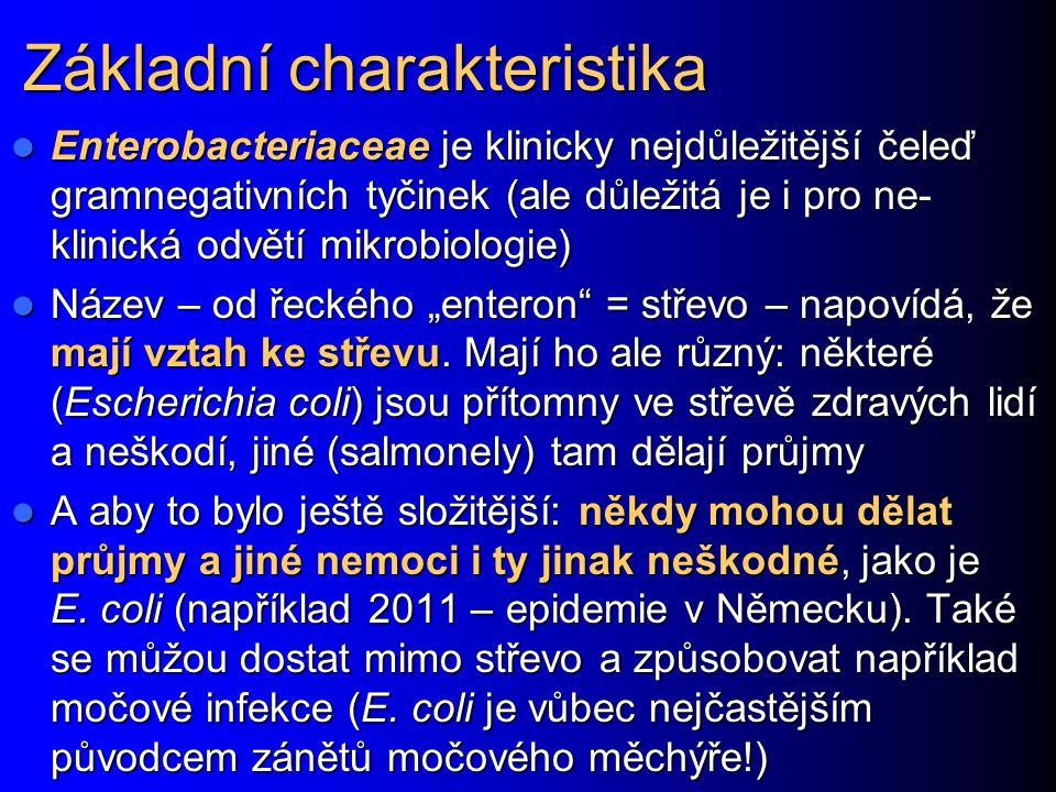 """Základní charakteristika Enterobacteriaceae je klinicky nejdůležitější čeleď gramnegativních tyčinek (ale důležitá je i pro ne- klinická odvětí mikrobiologie) Enterobacteriaceae je klinicky nejdůležitější čeleď gramnegativních tyčinek (ale důležitá je i pro ne- klinická odvětí mikrobiologie) Název – od řeckého """"enteron = střevo – napovídá, že mají vztah ke střevu."""