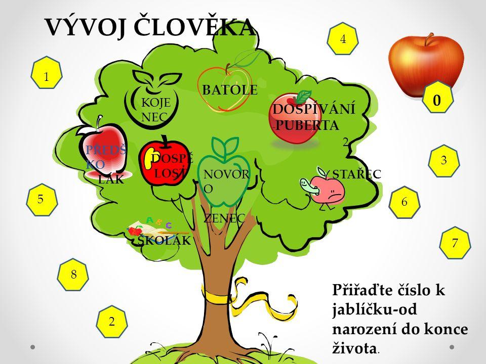 7 NOVOR O ZENEC ŠKOLÁK STAŘEC DOSPĚ LOST BATOLE PŘEDŠ KO LÁK DOSPÍVÁNÍ - PUBERTA KOJE NEC 6 Přiřaďte číslo k jablíčku-od narození do konce života.