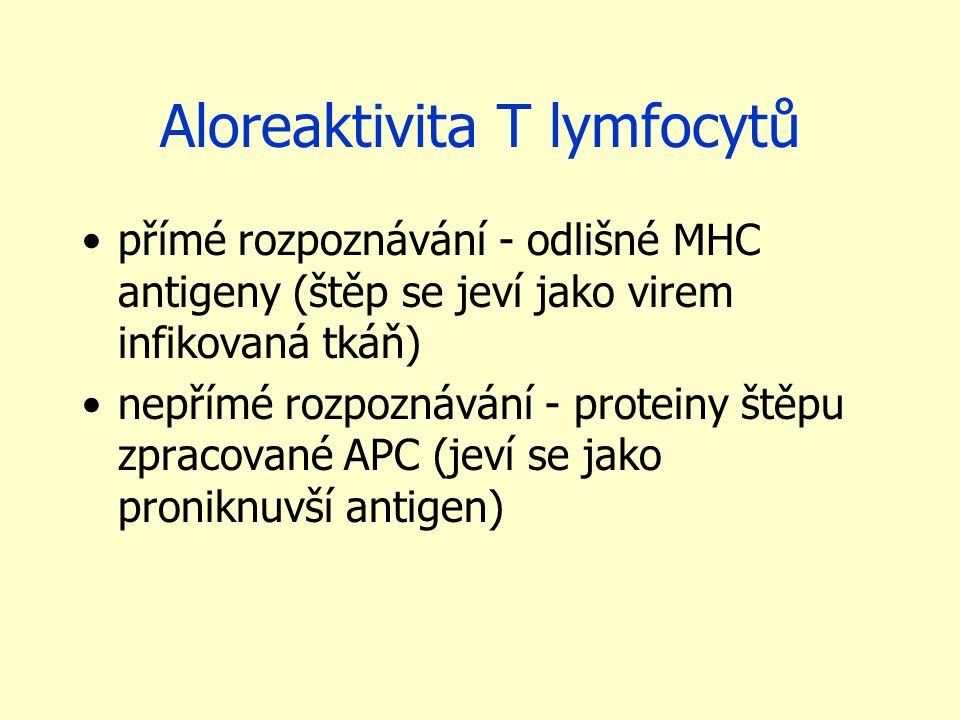 Aloreaktivita T lymfocytů přímé rozpoznávání - odlišné MHC antigeny (štěp se jeví jako virem infikovaná tkáň) nepřímé rozpoznávání - proteiny štěpu zpracované APC (jeví se jako proniknuvší antigen)