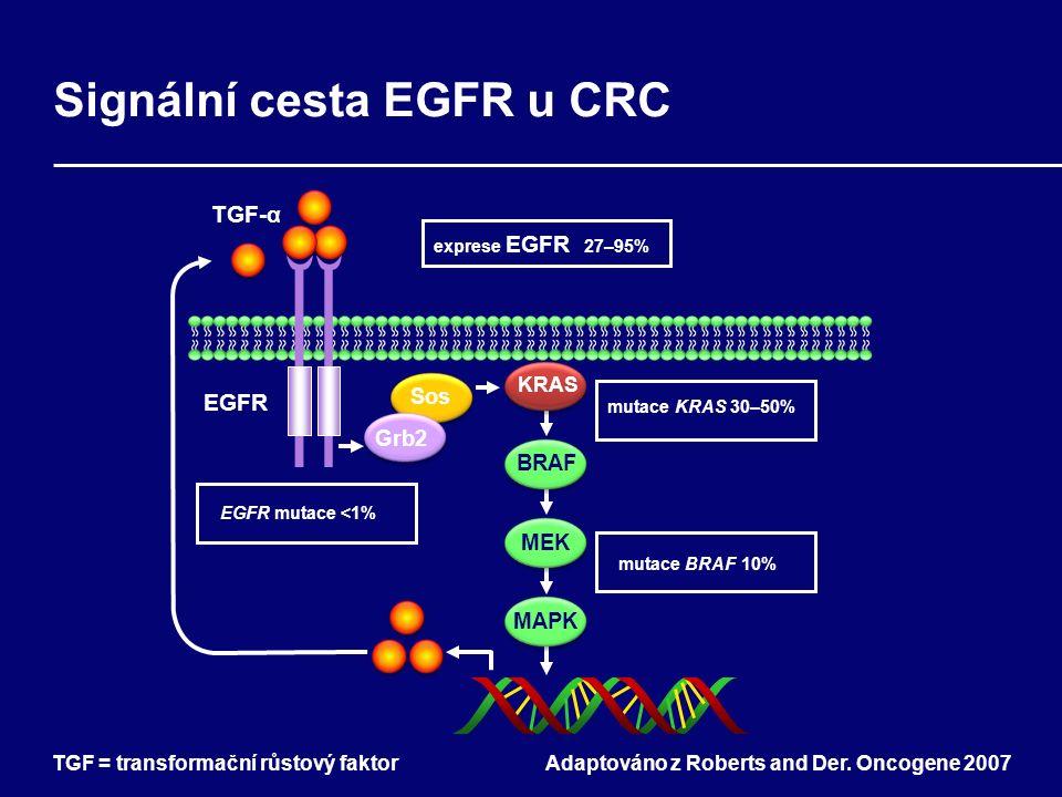 Signální cesta EGFR u CRC Adaptováno z Roberts and Der.