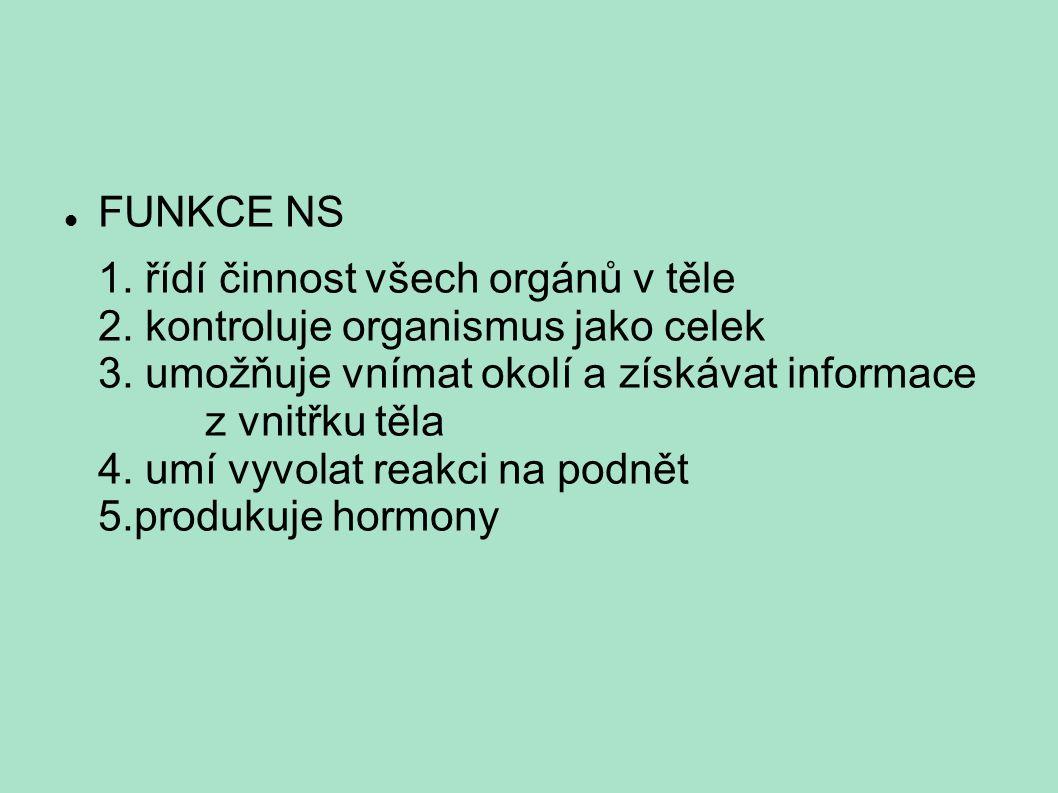 FUNKCE NS 1. řídí činnost všech orgánů v těle 2. kontroluje organismus jako celek 3. umožňuje vnímat okolí a získávat informace z vnitřku těla 4. umí