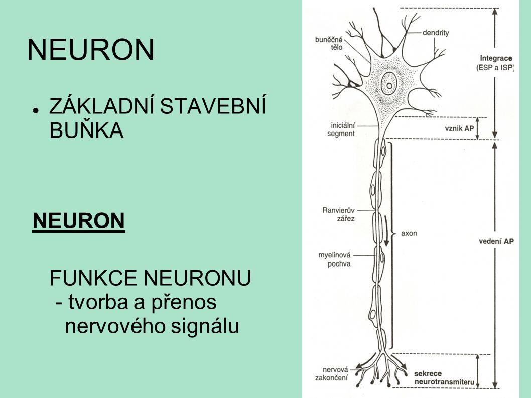 NEURON ZÁKLADNÍ STAVEBNÍ BUŇKA NEURON FUNKCE NEURONU - tvorba a přenos nervového signálu