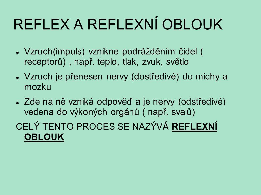 REFLEX A REFLEXNÍ OBLOUK Vzruch(impuls) vznikne podrážděním čidel ( receptorů), např. teplo, tlak, zvuk, světlo Vzruch je přenesen nervy (dostředivé)