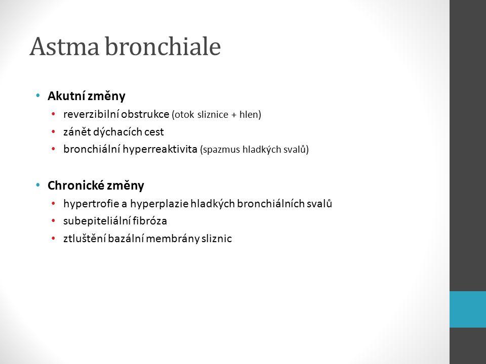 Astma bronchiale Akutní změny reverzibilní obstrukce (otok sliznice + hlen) zánět dýchacích cest bronchiální hyperreaktivita (spazmus hladkých svalů) Chronické změny hypertrofie a hyperplazie hladkých bronchiálních svalů subepiteliální fibróza ztluštění bazální membrány sliznic