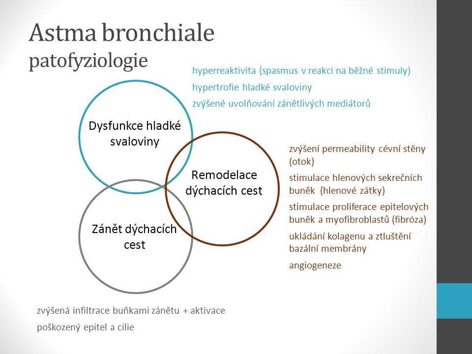 Astma bronchiale patofyziologie Dysfunkce hladké svaloviny Zánět dýchacích cest Remodelace dýchacích cest zvýšení permeability cévní stěny (otok) stimulace hlenových sekrečních buněk (hlenové zátky) stimulace proliferace epitelových buněk a myofibroblastů (fibróza) ukládání kolagenu a ztluštění bazální membrány angiogeneze zvýšená infiltrace buňkami zánětu + aktivace poškozený epitel a cilie hyperreaktivita (spasmus v reakci na běžné stimuly) hypertrofie hladké svaloviny zvýšené uvolňování zánětlivých mediátorů
