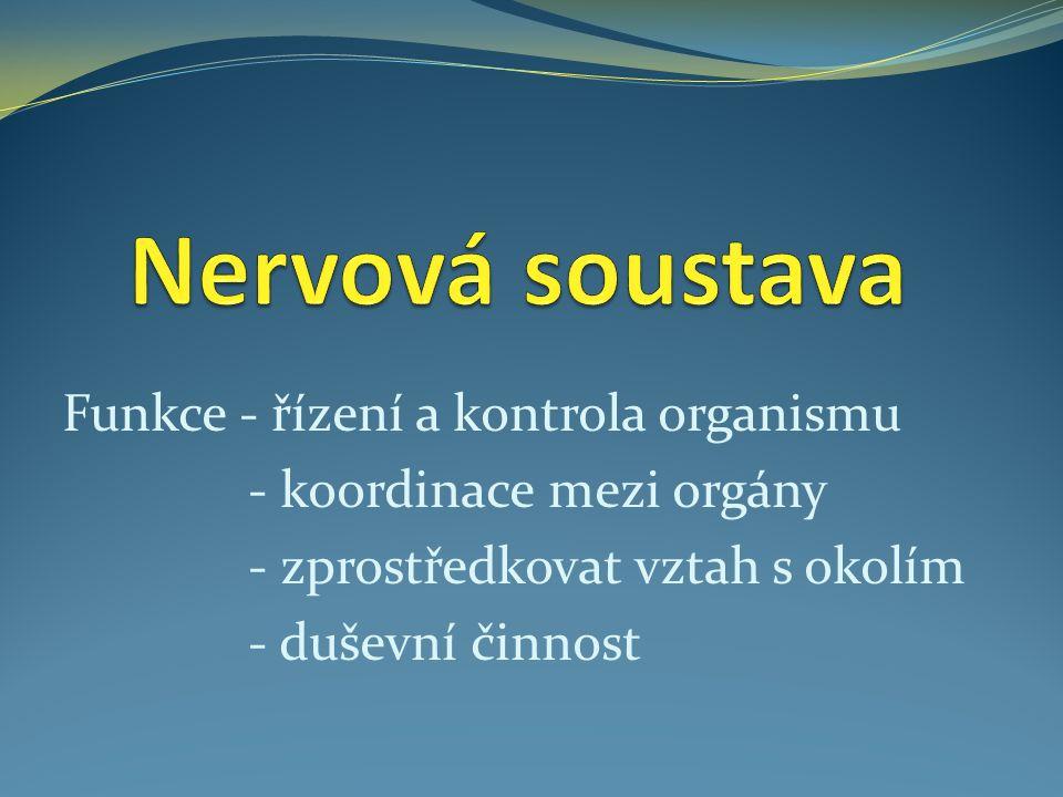 Funkce - řízení a kontrola organismu - koordinace mezi orgány - zprostředkovat vztah s okolím - duševní činnost
