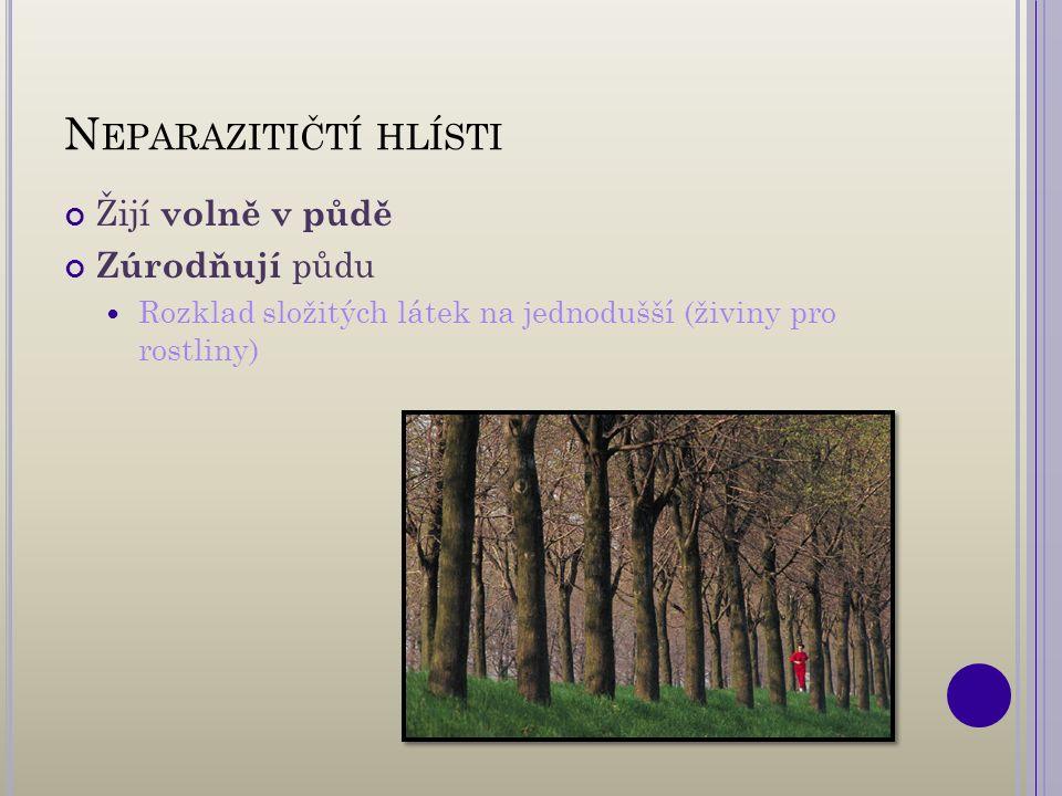 N EPARAZITIČTÍ HLÍSTI Žijí volně v půdě Zúrodňují půdu Rozklad složitých látek na jednodušší (živiny pro rostliny)