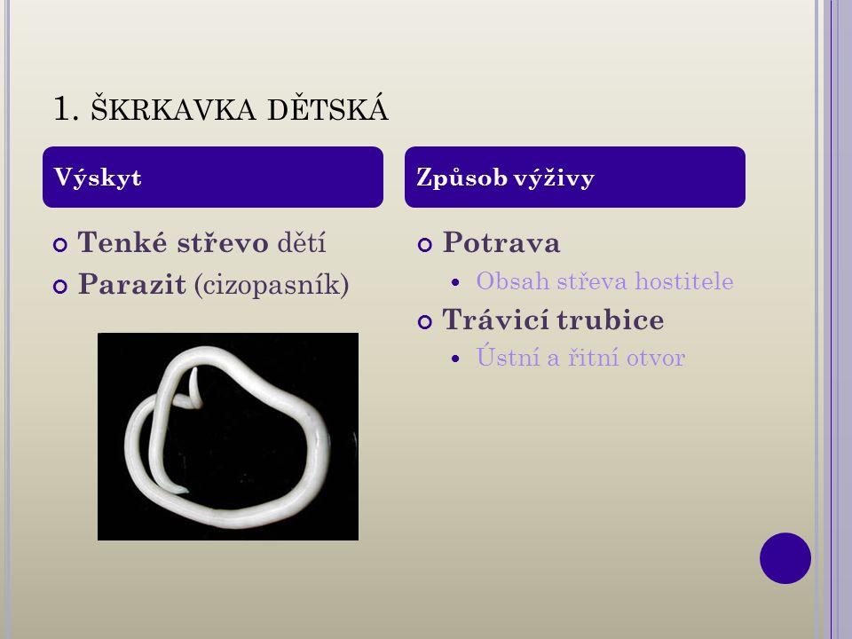 1. ŠKRKAVKA DĚTSKÁ Tenké střevo dětí Parazit (cizopasník) Potrava Obsah střeva hostitele Trávicí trubice Ústní a řitní otvor VýskytZpůsob výživy