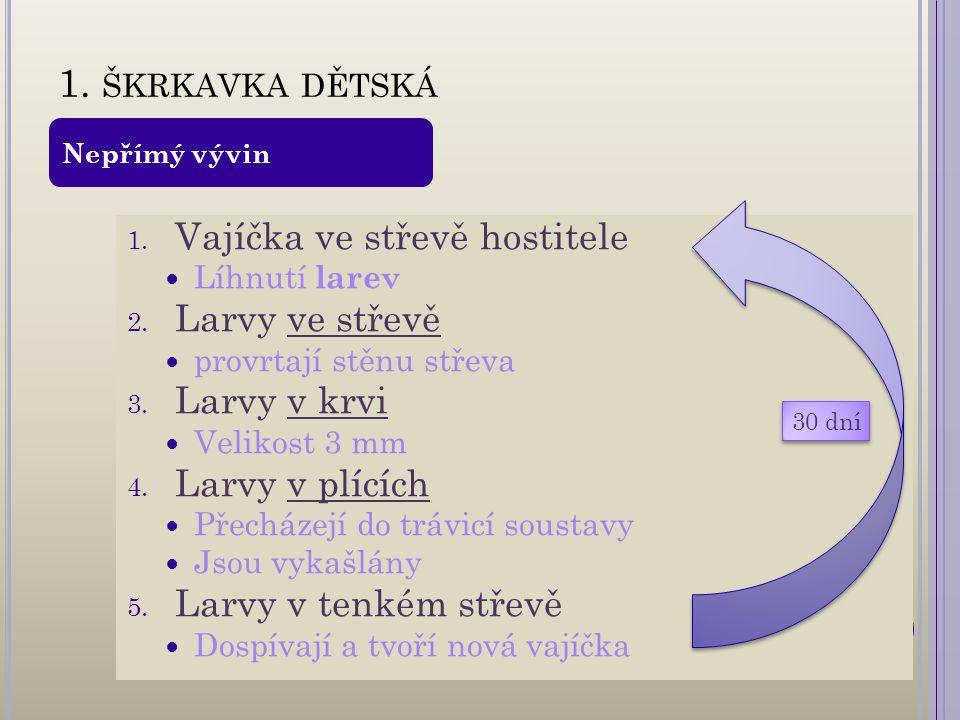 1. ŠKRKAVKA DĚTSKÁ 1. Vajíčka ve střevě hostitele Líhnutí larev 2.