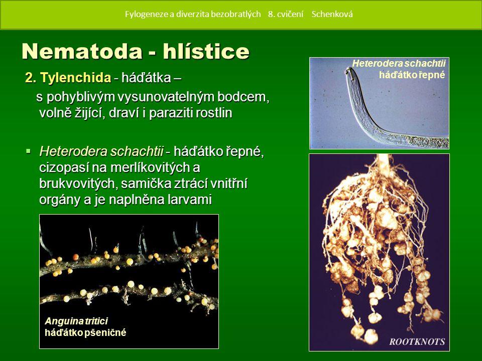 2. Tylenchida - háďátka – s pohyblivým vysunovatelným bodcem, volně žijící, draví i paraziti rostlin s pohyblivým vysunovatelným bodcem, volně žijící,