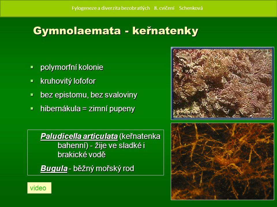  polymorfní kolonie  kruhovitý lofofor  bez epistomu, bez svaloviny  hibernákula = zimní pupeny Paludicella articulata (keřnatenka bahenní) - žije ve sladké i brakické vodě Bugula - běžný mořský rod Gymnolaemata - keřnatenky Fylogenze a diverzita bezobratlých 8.