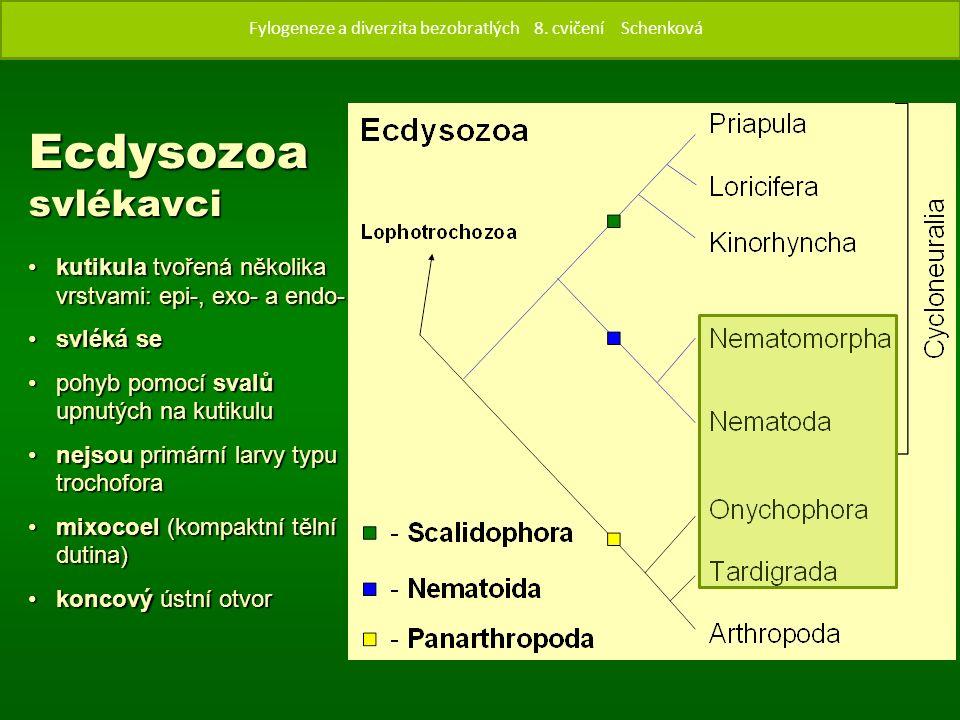 Ecdysozoa svlékavci kutikula tvořená několika vrstvami: epi-, exo- a endo-kutikula tvořená několika vrstvami: epi-, exo- a endo- svléká sesvléká se pohyb pomocí svalů upnutých na kutikulupohyb pomocí svalů upnutých na kutikulu nejsou primární larvy typu trochoforanejsou primární larvy typu trochofora mixocoel (kompaktní tělní dutina)mixocoel (kompaktní tělní dutina) koncový ústní otvorkoncový ústní otvor Fylogenze a diverzita bezobratlých 8.