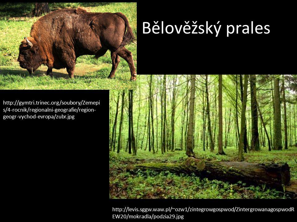 Bělověžský prales http://gymtri.trinec.org/soubory/Zemepi s/4-rocnik/regionalni-geografie/region- geogr-vychod-evropa/zubr.jpg http://levis.sggw.waw.pl/~ozw1/zintegrowgospwod/ZintergrowanagospwodR EW20/mokradla/podzia29.jpg