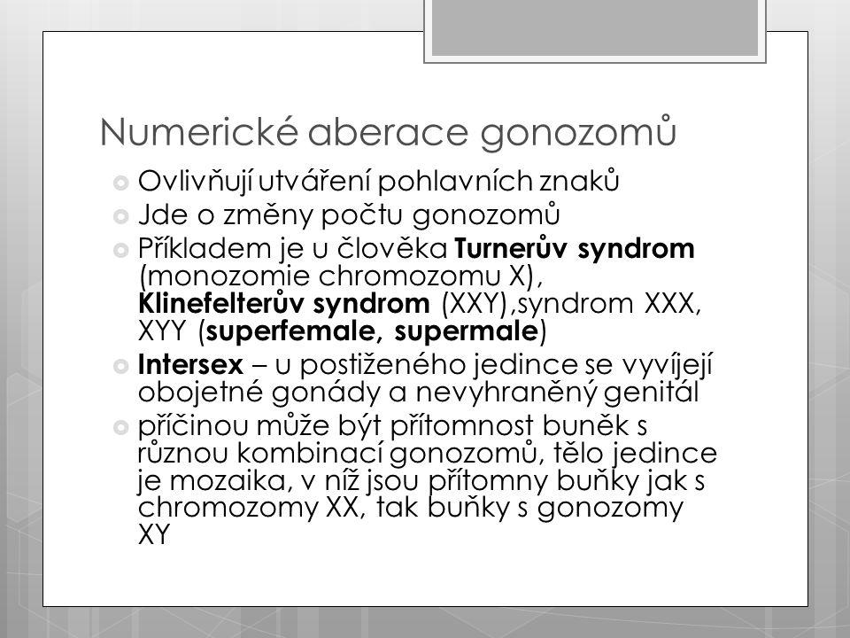 Numerické aberace gonozomů  Ovlivňují utváření pohlavních znaků  Jde o změny počtu gonozomů  Příkladem je u člověka Turnerův syndrom (monozomie chromozomu X), Klinefelterův syndrom (XXY),syndrom XXX, XYY ( superfemale, supermale )  Intersex – u postiženého jedince se vyvíjejí obojetné gonády a nevyhraněný genitál  příčinou může být přítomnost buněk s různou kombinací gonozomů, tělo jedince je mozaika, v níž jsou přítomny buňky jak s chromozomy XX, tak buňky s gonozomy XY