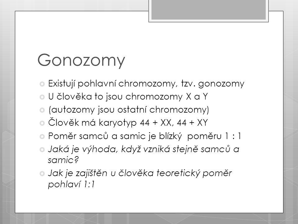 Otázky a úkoly  V případě normálního průběhu meiózy vytvářejí muži spermie s 22 autozomy a s gonozomem Y (všechny spermie – některé spermie – žádné spermie tuto sestavu nemají)  Baarovo tělísko lze pozorovat v buňkách žen s Turnerovým syndromem (Ano – Ne)  Osoby s Turnerovým syndromem jsou vždy ženy(Ano – Ne)  Pohlaví je u ptáků určeno stejně jako u savců (Ano - Ne)  Muži s Klinefelterovým syndromem mají v buňkách 47 – 46 – 45 chromozomů