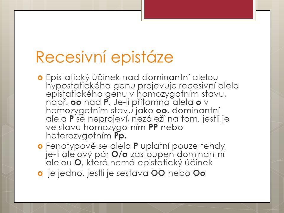 Recesivní epistáze  Epistatický účinek nad dominantní alelou hypostatického genu projevuje recesivní alela epistatického genu v homozygotním stavu, např.