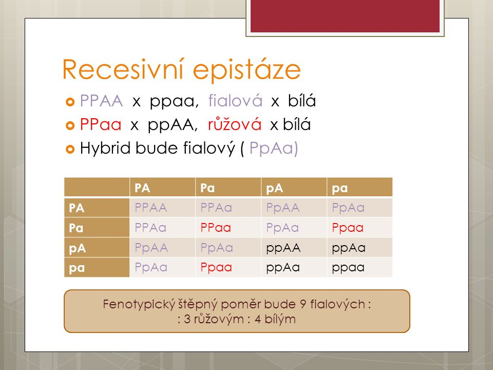 Recesivní epistáze  PPAA x ppaa, fialová x bílá  PPaa x ppAA, růžová x bílá  Hybrid bude fialový ( PpAa) PAPapApa PA PPAAPPAaPpAAPpAa Pa PPAaPPaaPpAaPpaa pA PpAAPpAappAAppAa pa PpAaPpaappAappaa Fenotypický štěpný poměr bude 9 fialových : : 3 růžovým : 4 bílým