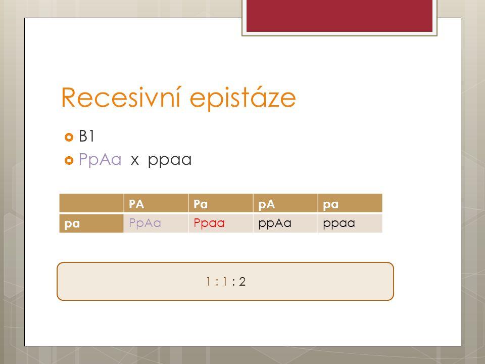 Recesivní epistáze  B1  PpAa x ppaa PAPapApa PpAaPpaappAappaa 1 : 1 : 2