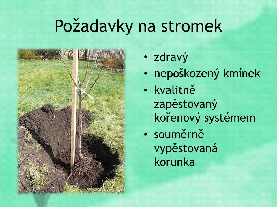 Požadavky na stromek zdravý nepoškozený kmínek kvalitně zapěstovaný kořenový systémem souměrně vypěstovaná korunka