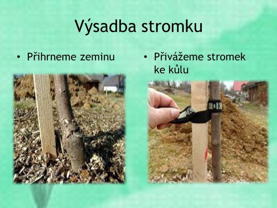 Výsadba stromku Přihrneme zeminu Přivážeme stromek ke kůlu