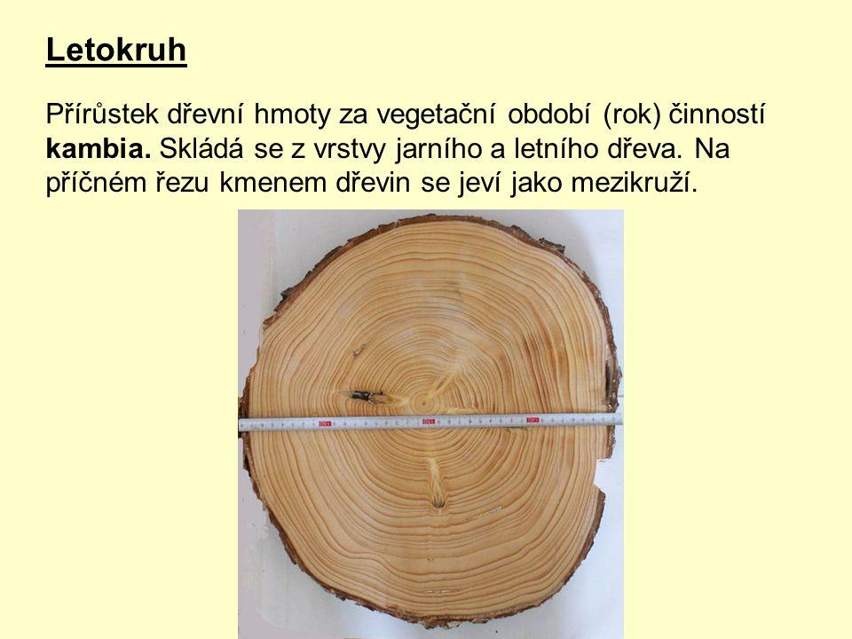 Letokruh Přírůstek dřevní hmoty za vegetační období (rok) činností kambia.