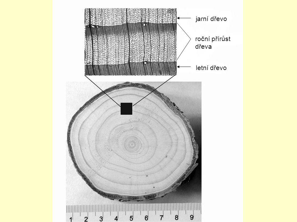 letní dřevo jarní dřevo roční přírůst dřeva