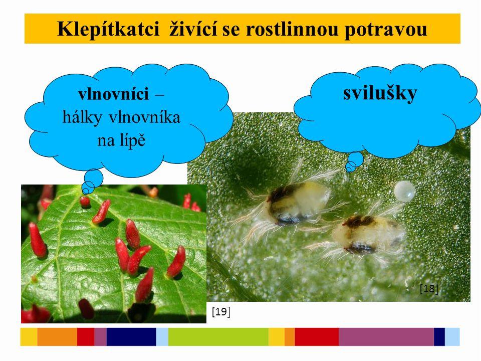 [1 ] [2 ] [5 ] Klepítkatci živící se rostlinnou potravou [10 ] [19 ] [18 ] svilušky vlnovníci – hálky vlnovníka na lípě