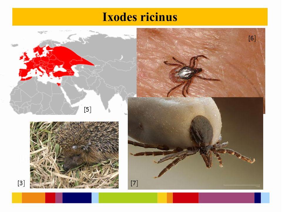 [1 ] [2 ] Ixodes ricinus [3 ] [5 ] [6 ] [7 ]