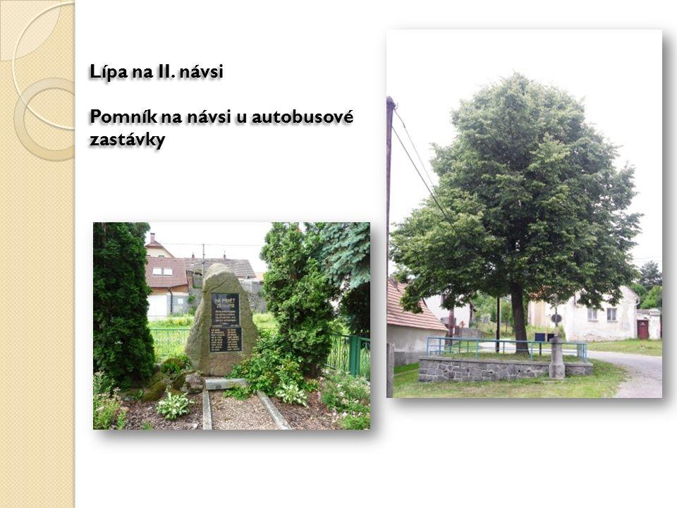 Lípa na II. návsi Pomník na návsi u autobusové zastávky