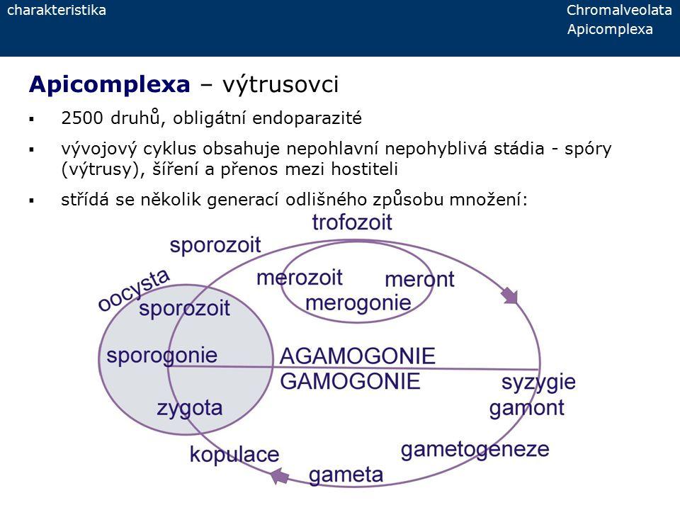 charakteristika Chromalveolata Apicomplexa Apicomplexa – výtrusovci  2500 druhů, obligátní endoparazité  vývojový cyklus obsahuje nepohlavní nepohyb