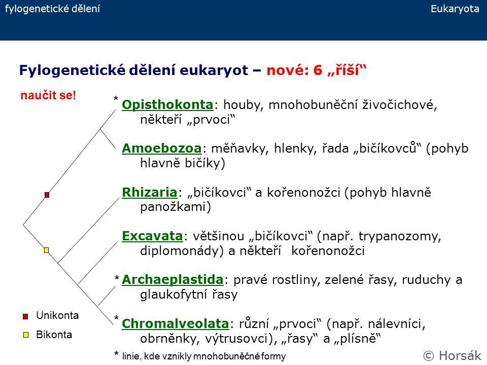 """Fylogenetické dělení eukaryot – nové: 6 """"říší"""" fylogenetické dělení Eukaryota Opisthokonta: houby, mnohobuněční živočichové, někteří """"prvoci"""" Amoebozo"""