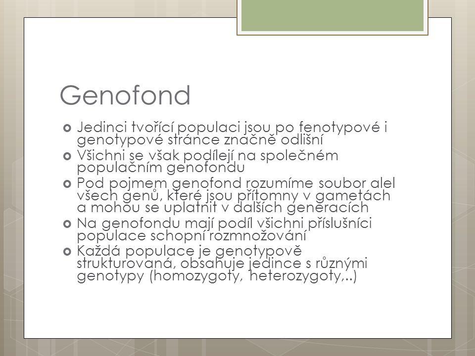 Genofond  Jedinci tvořící populaci jsou po fenotypové i genotypové stránce značně odlišní  Všichni se však podílejí na společném populačním genofondu  Pod pojmem genofond rozumíme soubor alel všech genů, které jsou přítomny v gametách a mohou se uplatnit v dalších generacích  Na genofondu mají podíl všichni příslušníci populace schopní rozmnožování  Každá populace je genotypově strukturovaná, obsahuje jedince s různými genotypy (homozygoty, heterozygoty,..)