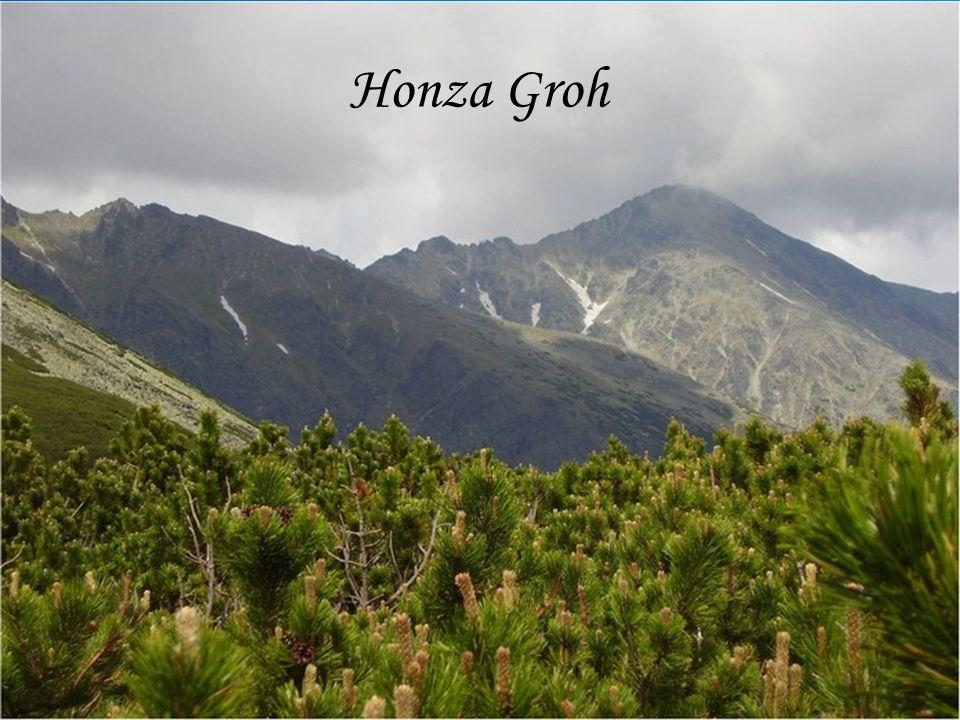 Honza Groh