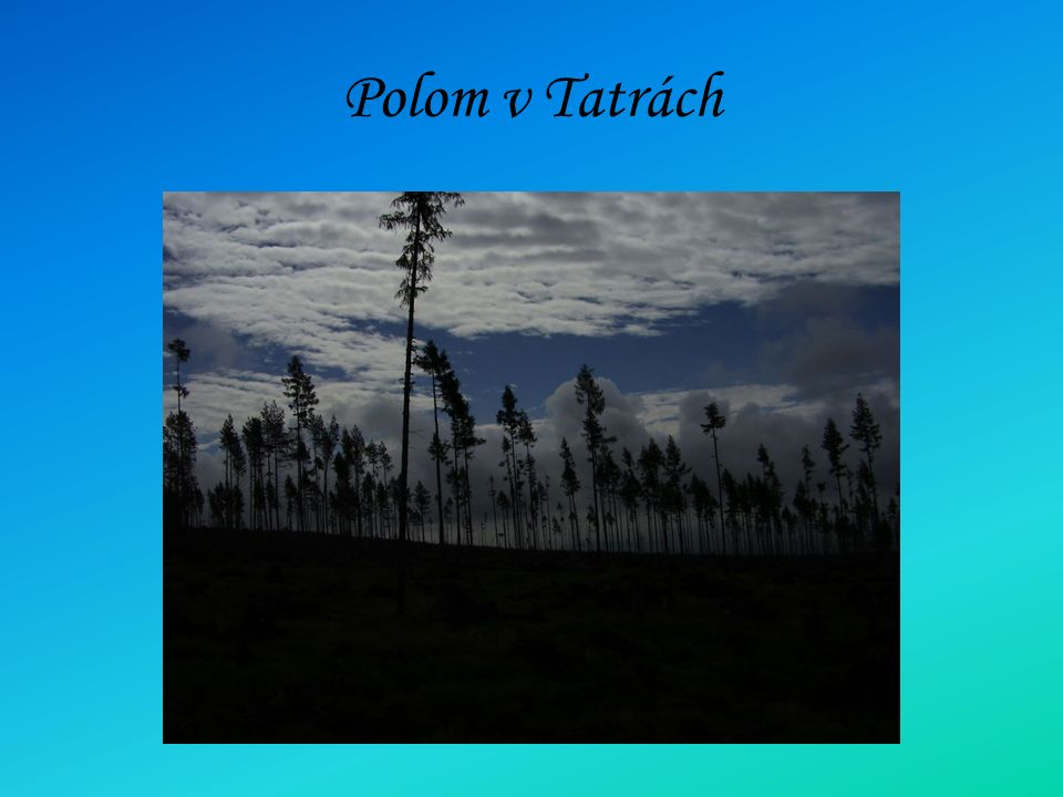 Polom v Tatrách
