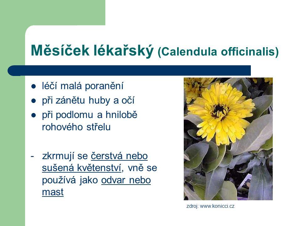 Měsíček lékařský (Calendula officinalis) léčí malá poranění při zánětu huby a očí při podlomu a hnilobě rohového střelu - zkrmují se čerstvá nebo sušená květenství, vně se používá jako odvar nebo mast zdroj: www.konicci.cz