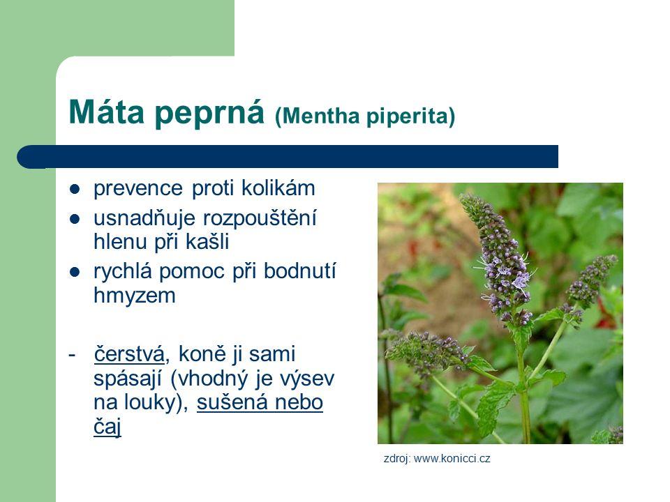 Máta peprná (Mentha piperita) prevence proti kolikám usnadňuje rozpouštění hlenu při kašli rychlá pomoc při bodnutí hmyzem - čerstvá, koně ji sami spásají (vhodný je výsev na louky), sušená nebo čaj zdroj: www.konicci.cz