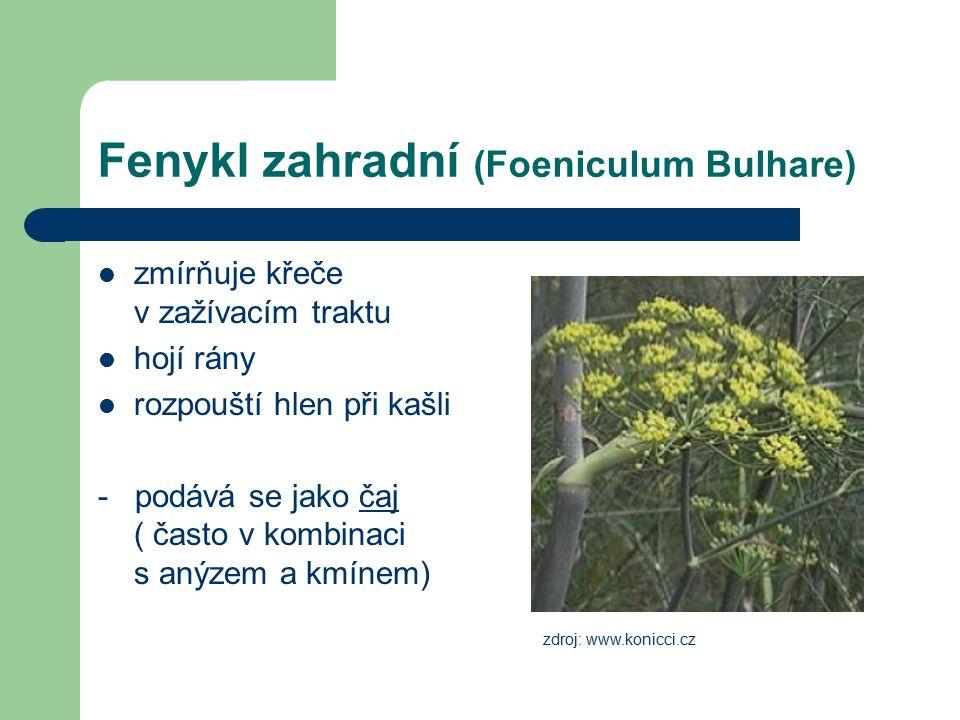 Fenykl zahradní (Foeniculum Bulhare) zmírňuje křeče v zažívacím traktu hojí rány rozpouští hlen při kašli - podává se jako čaj ( často v kombinaci s a