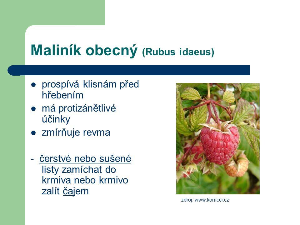Maliník obecný (Rubus idaeus) prospívá klisnám před hřebením má protizánětlivé účinky zmírňuje revma - čerstvé nebo sušené listy zamíchat do krmiva nebo krmivo zalít čajem zdroj: www.konicci.cz