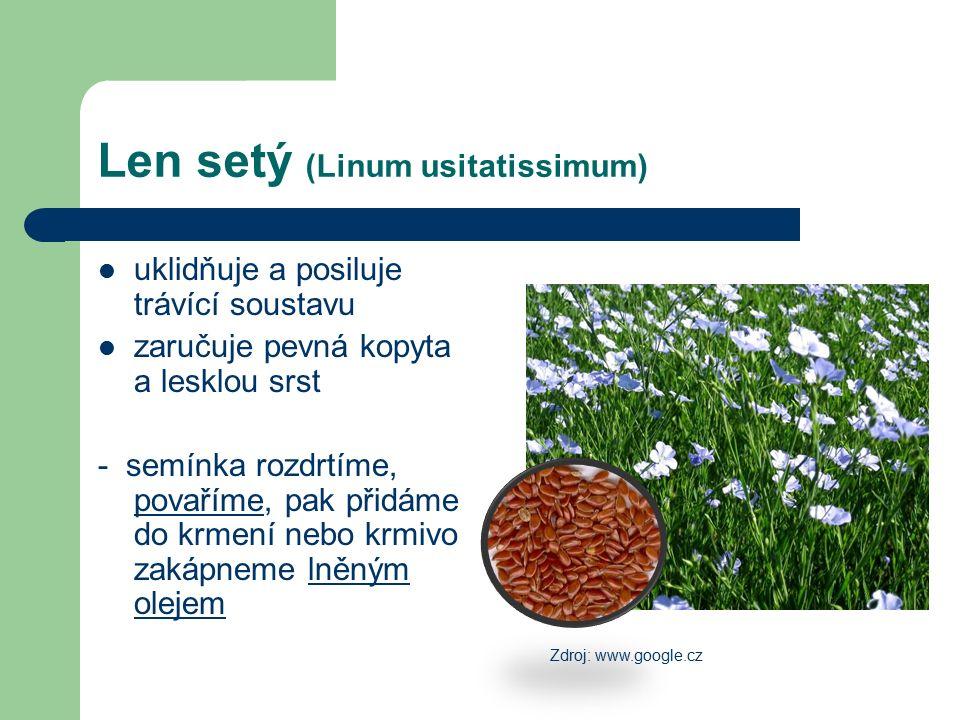 Len setý (Linum usitatissimum) uklidňuje a posiluje trávící soustavu zaručuje pevná kopyta a lesklou srst - semínka rozdrtíme, povaříme, pak přidáme d