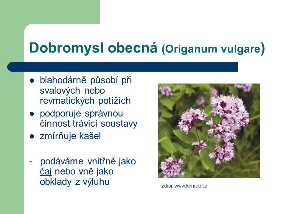 Dobromysl obecná (Origanum vulgare ) blahodárně působí při svalových nebo revmatických potížích podporuje správnou činnost trávicí soustavy zmírňuje k