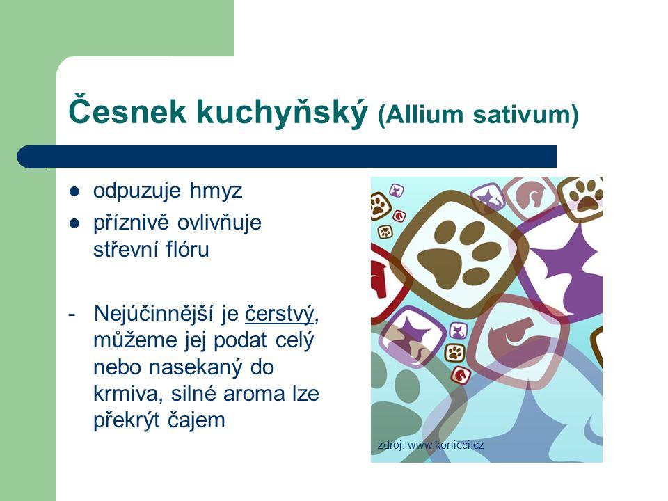 Česnek kuchyňský (Allium sativum) odpuzuje hmyz příznivě ovlivňuje střevní flóru - Nejúčinnější je čerstvý, můžeme jej podat celý nebo nasekaný do krmiva, silné aroma lze překrýt čajem zdroj: www.konicci.cz