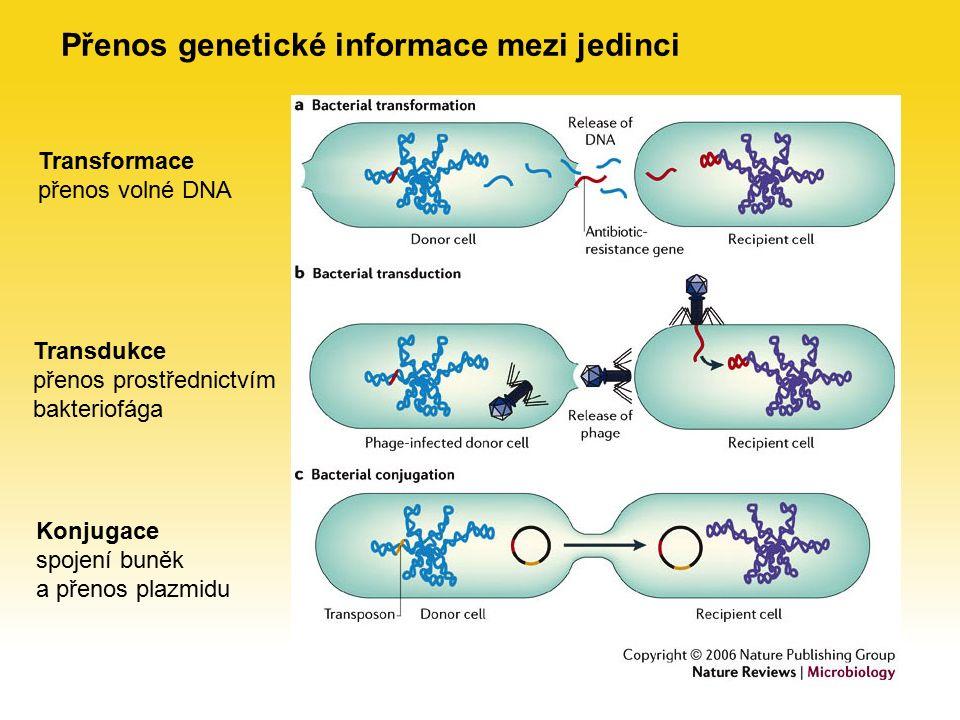 Přenos genetické informace mezi jedinci Transformace přenos volné DNA Transdukce přenos prostřednictvím bakteriofága Konjugace spojení buněk a přenos plazmidu