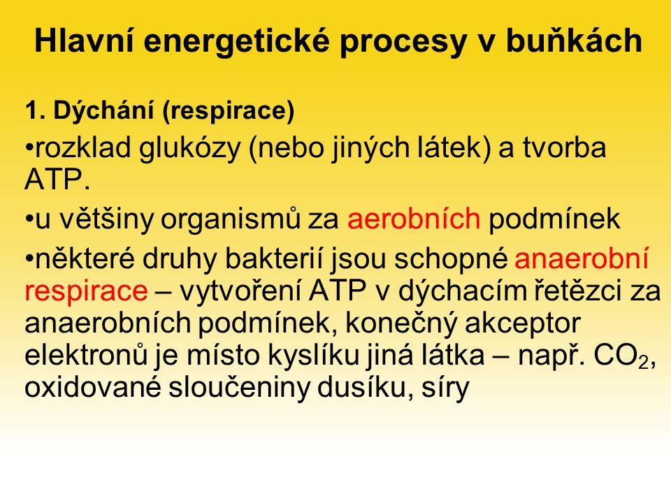 Hlavní energetické procesy v buňkách 1.