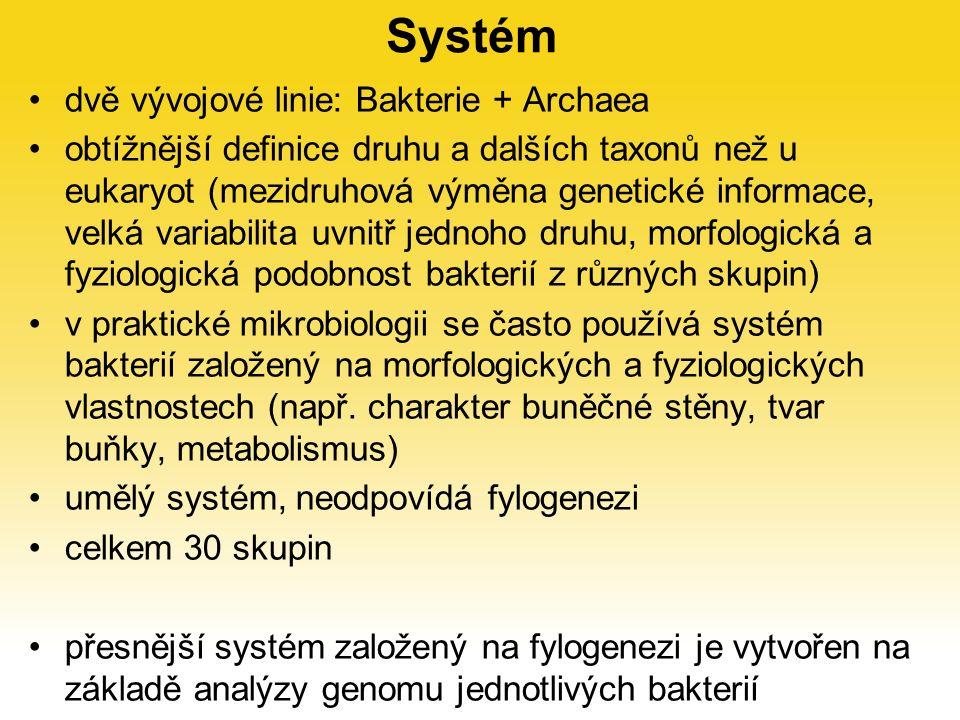 Systém dvě vývojové linie: Bakterie + Archaea obtížnější definice druhu a dalších taxonů než u eukaryot (mezidruhová výměna genetické informace, velká variabilita uvnitř jednoho druhu, morfologická a fyziologická podobnost bakterií z různých skupin) v praktické mikrobiologii se často používá systém bakterií založený na morfologických a fyziologických vlastnostech (např.