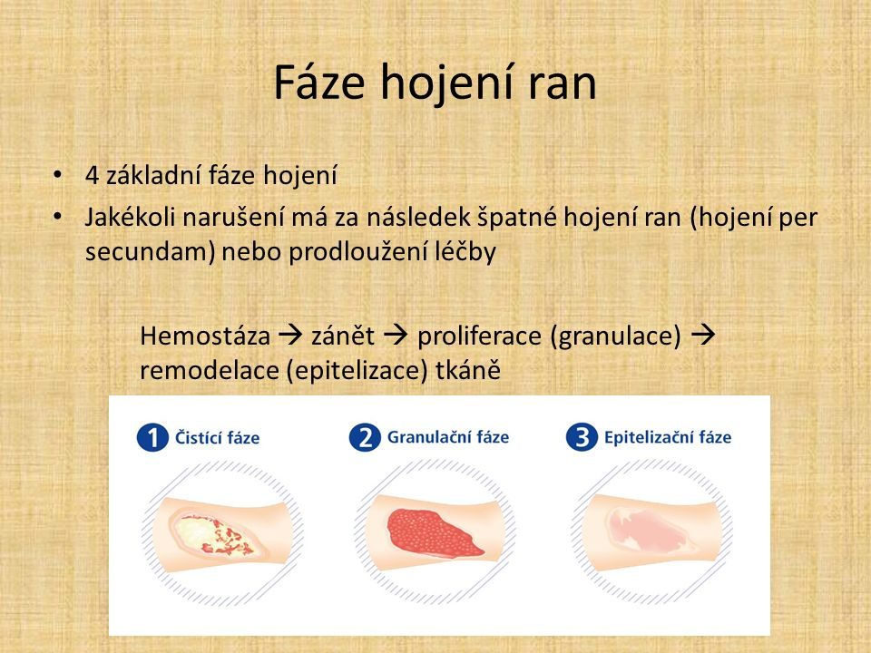 Fáze hojení ran 4 základní fáze hojení Jakékoli narušení má za následek špatné hojení ran (hojení per secundam) nebo prodloužení léčby Hemostáza  zánět  proliferace (granulace)  remodelace (epitelizace) tkáně