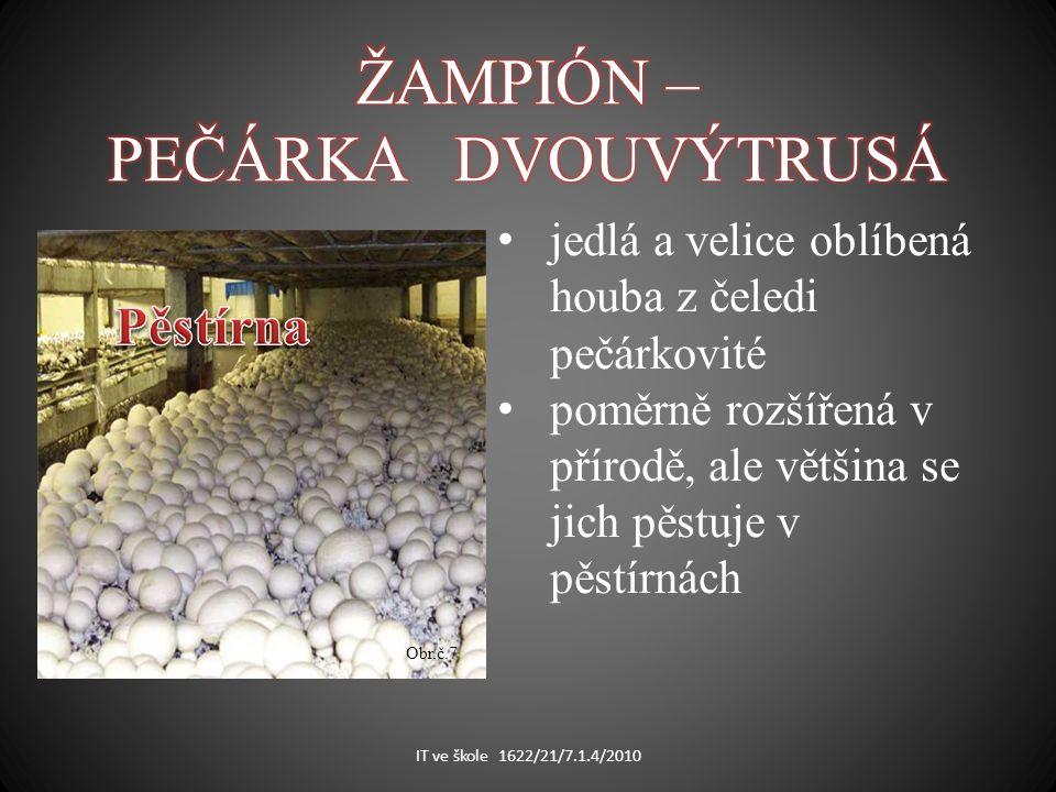 IT ve škole 1622/21/7.1.4/2010 jedlá a velice oblíbená houba z čeledi pečárkovité poměrně rozšířená v přírodě, ale většina se jich pěstuje v pěstírnách Obr.č.7