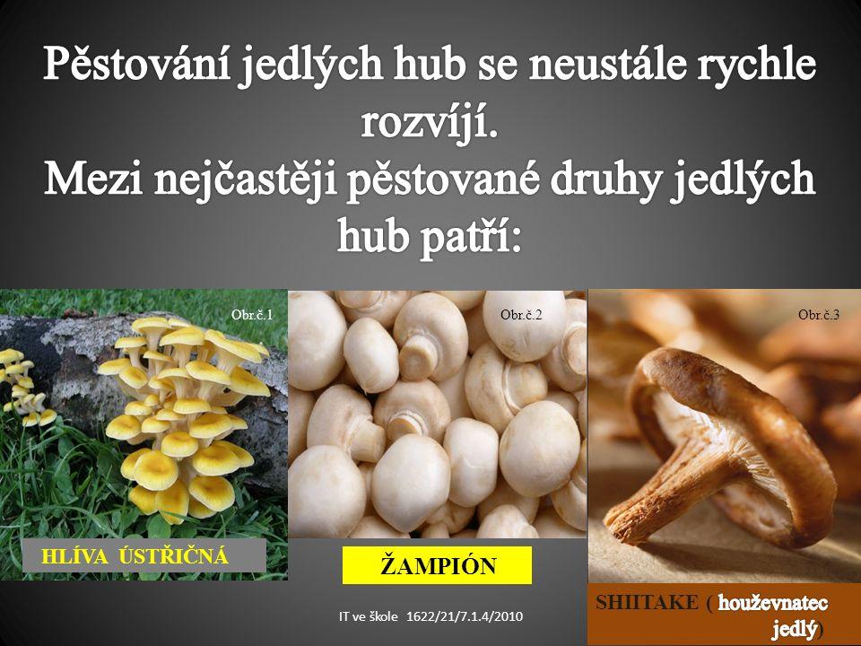 HLÍVA ÚSTŘIČNÁ ŽAMPIÓN Obr.č.1Obr.č.2Obr.č.3